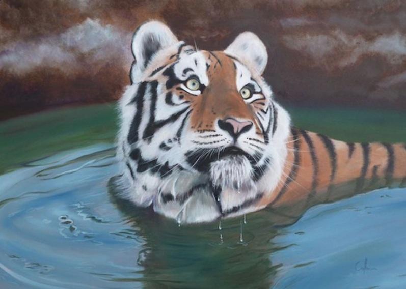 NICOLA COLBRAN-Amur Tiger Cub