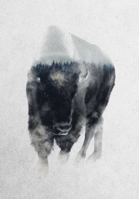 Andreas Lie-Aurochs