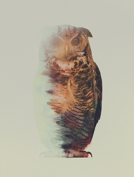 Andreas Lie-Owl