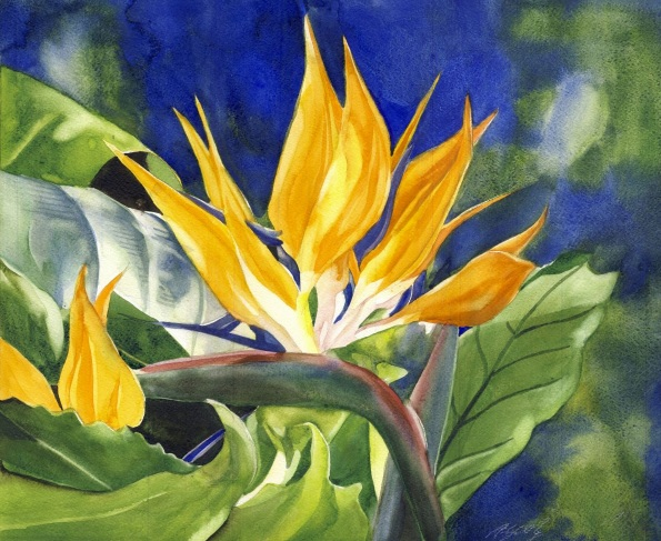 Alfred Ng - Bird of paradise