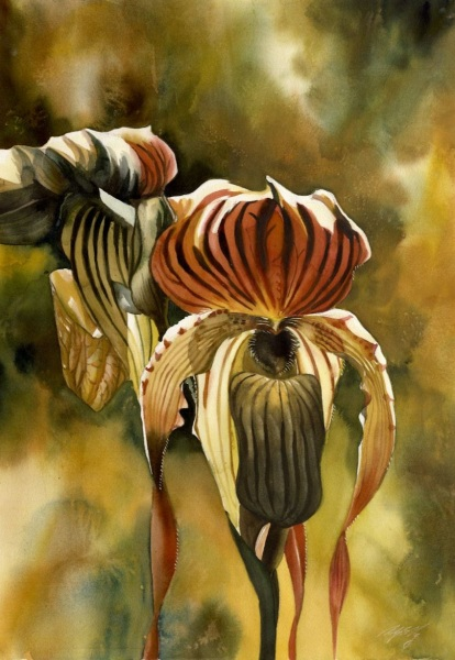 Alfred Ng - Golden ladyslipper orchid