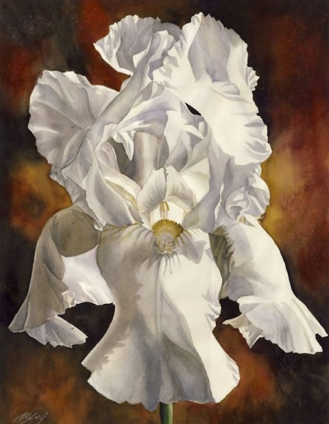 Alfred Ng - White iris with red