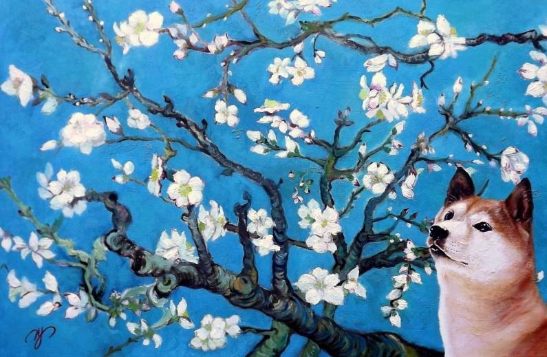 H Y- Classical Shiba Inu