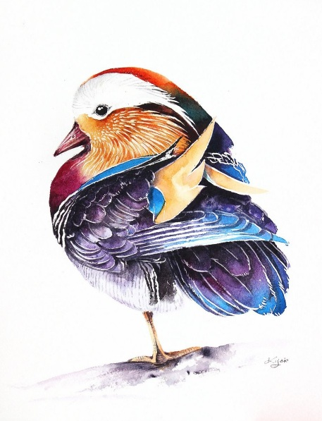 Karolina Kijak - Mandarin Duck