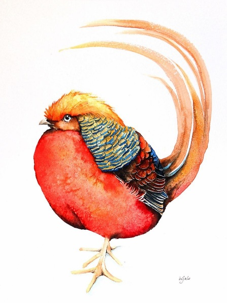 Karolina Kijak - The golden pheasant
