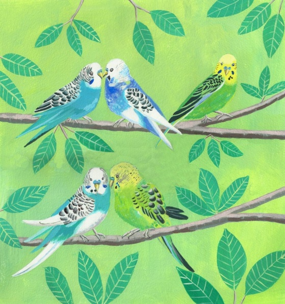 Mary Stubberfield - Budgerigars on branches