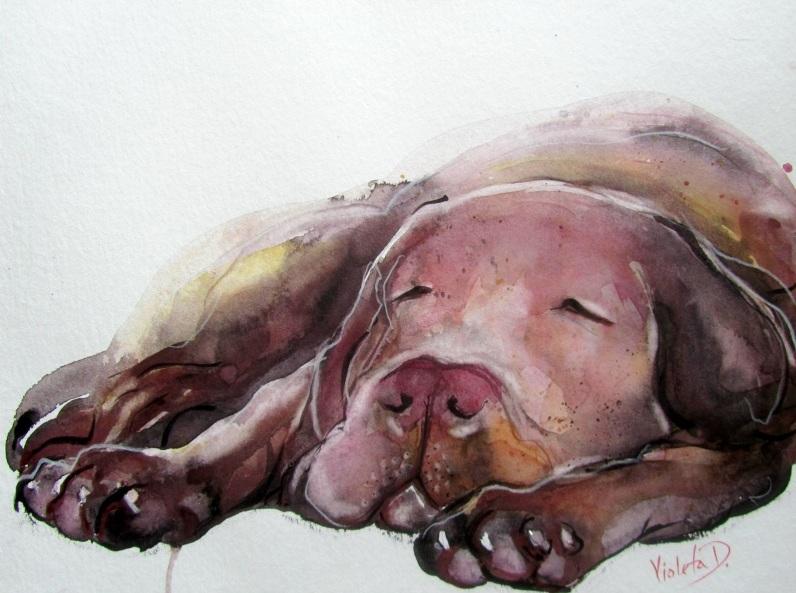 Violeta Damjanovic-Behrendt - I need a nap! Woof!
