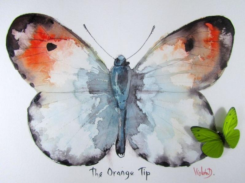 Violeta Damjanovic-Behrendt - The Orange Tip