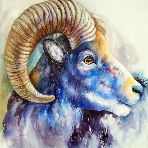 arti-chauhan-blue-bighorn
