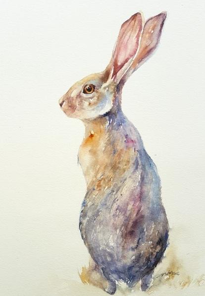 arti-chauhan-jack-rabbit