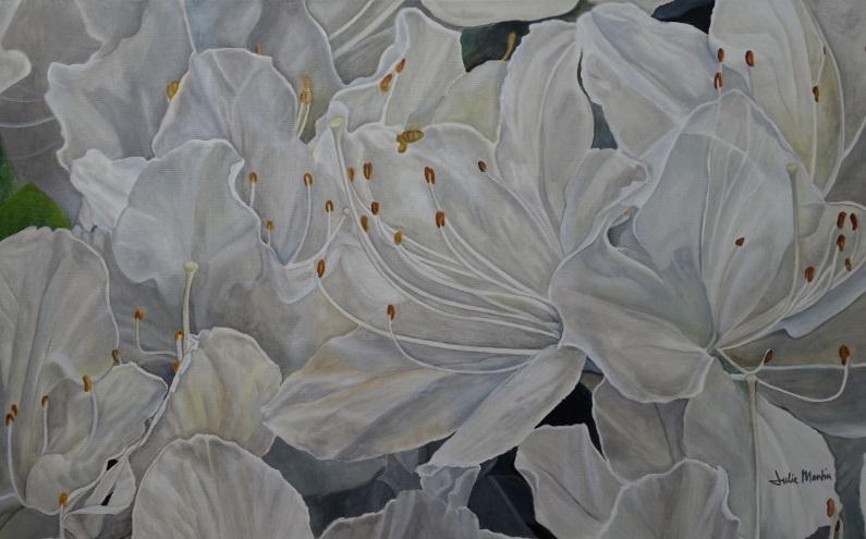 julie-martin-white-azalea