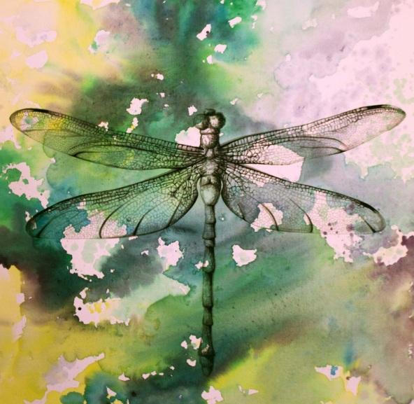 victoria-stothard-hawker-dragonfly