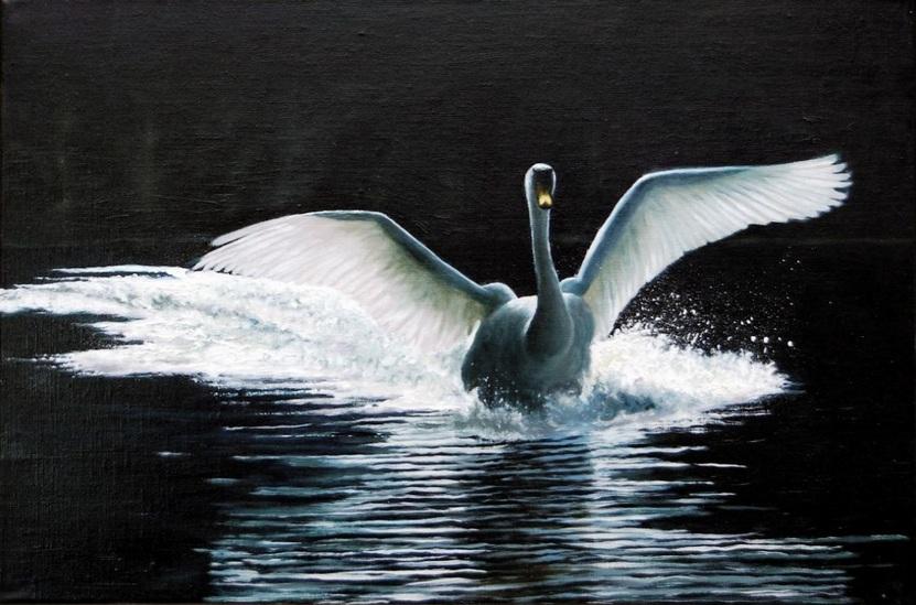 andrew-mcneile-jones-a-mute-swan-landing