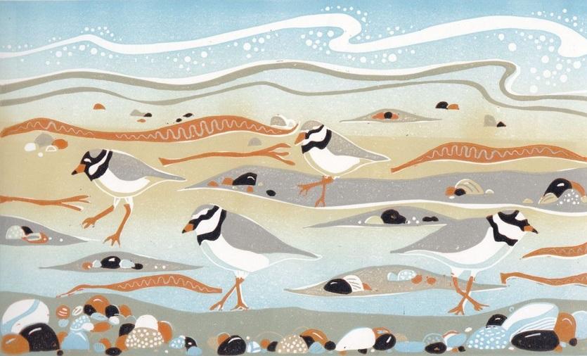 Alison Deegan - Ringed Plovers at New England Bay