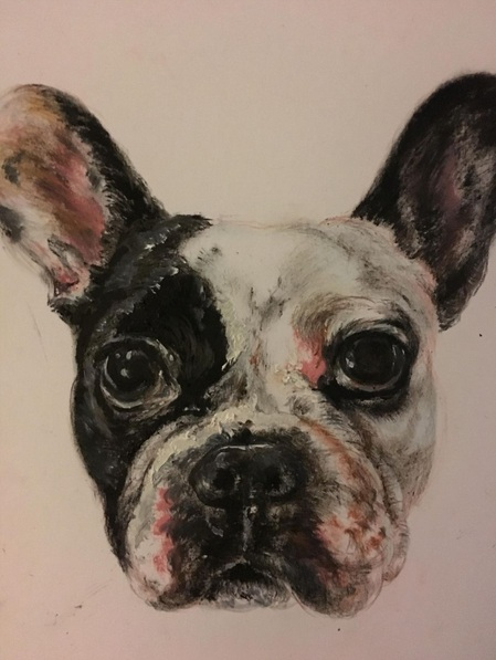 Jimmy Walmsley - French bulldog