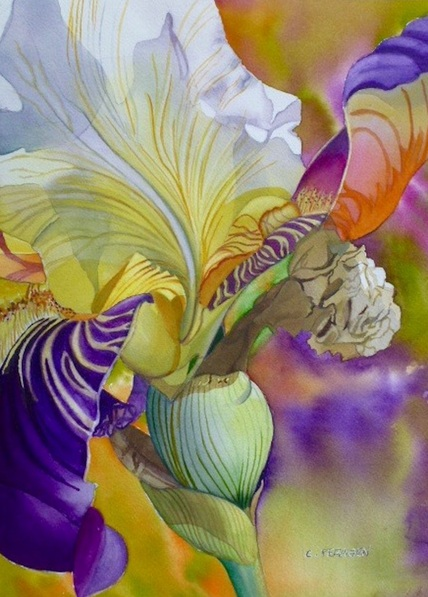 Cheryl Feragen - White and Purple Iris