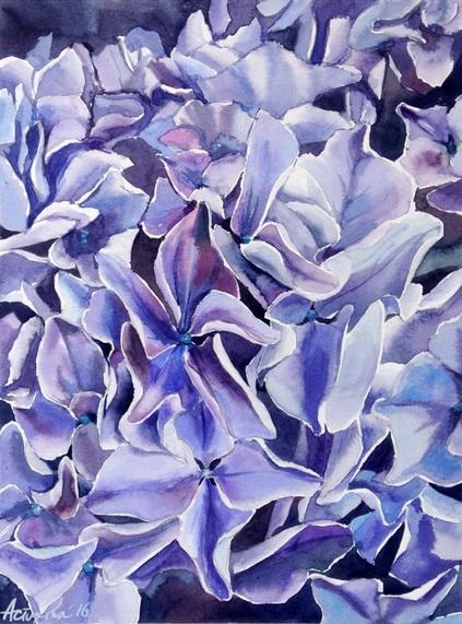 Ksenia Astakhova - A Purple Hydrangea