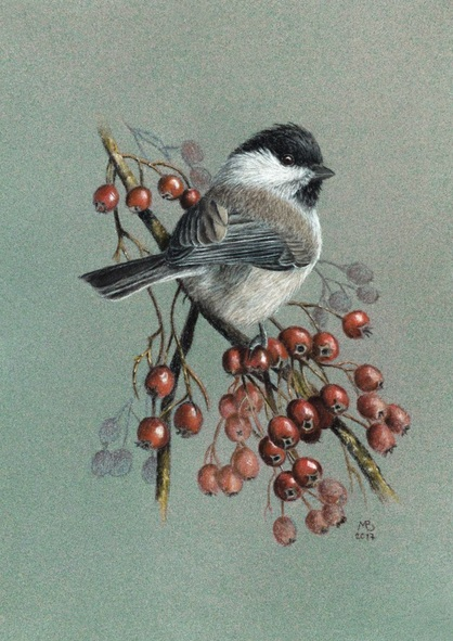 Mikhail Vedernikov - Original pastel drawing Willow tit