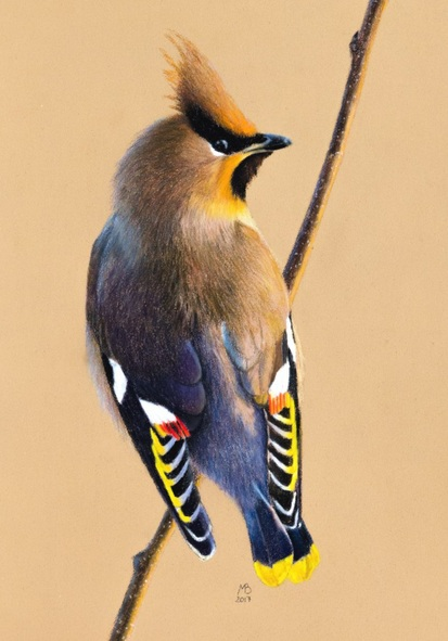 Mikhail Vedernikov - Waxwing
