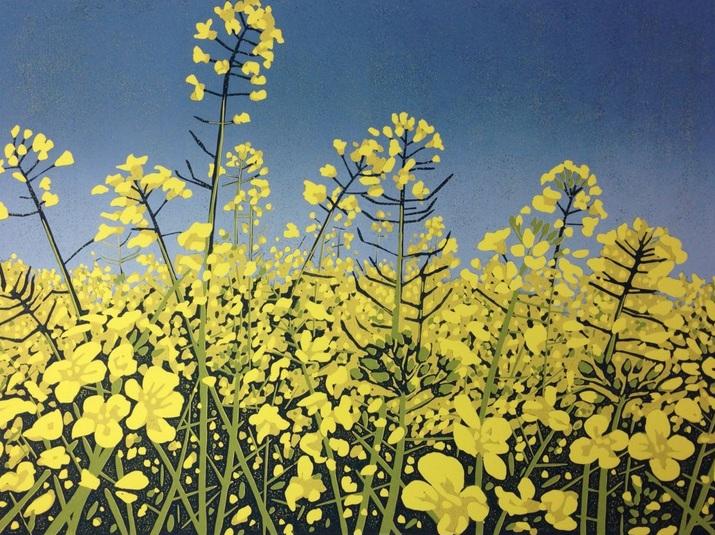 Alexandra Buckle - Sunshine Fields