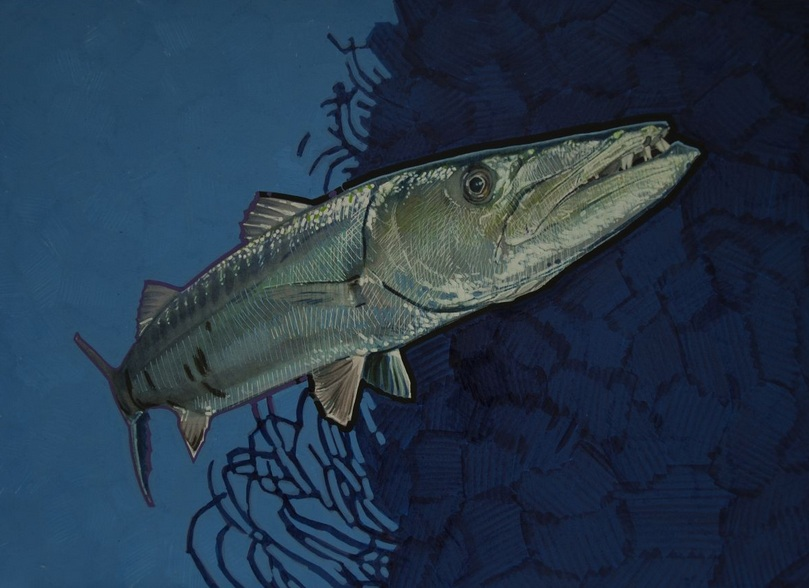 Carlos J. Marquez - Great Barracuda