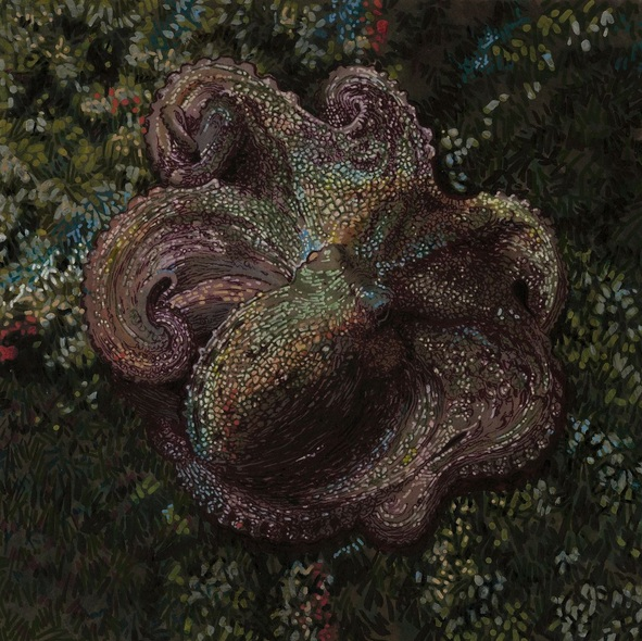 Carlos J. Marquez - Octopus vulgaris