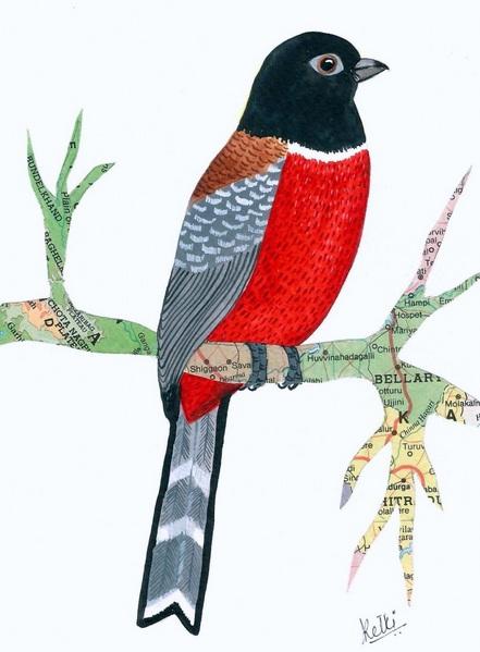 Ketki Fadnis - Malabar Trogon