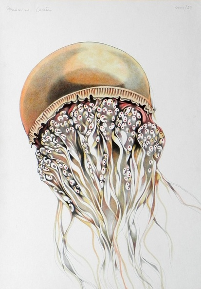 FEDERICO CORTESE - orange jellyfish
