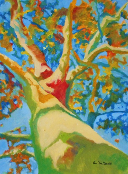 Ann Cameron McDonald - Looking Up at Tree in Fall