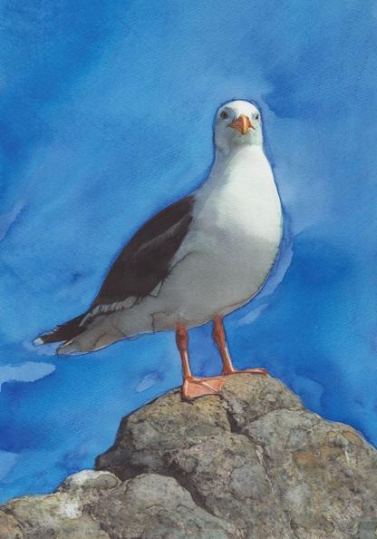 REME Junior - Blacksea Seagull