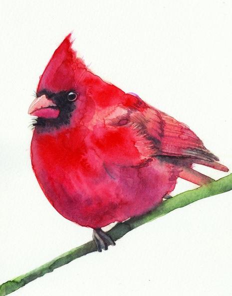 REME Junior - Northern Cardinal