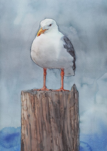 REME Junior - Seagull after the season