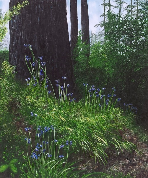 Hazel Thomson - Spring Forest Floor