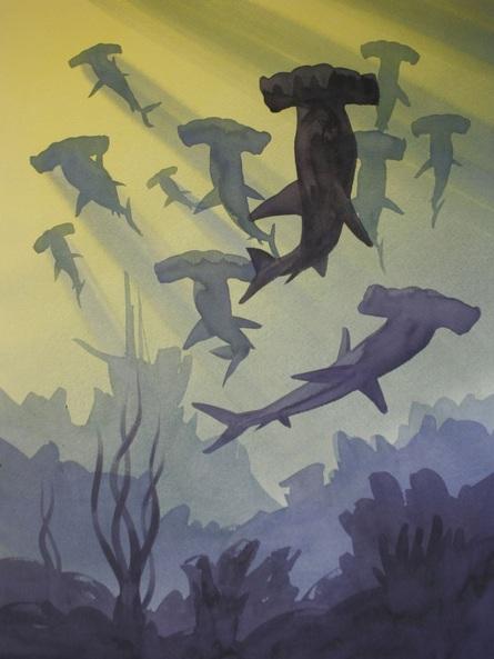 Matthew Forster - Sharks