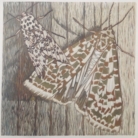 Alison Headley - Mammoth Moths