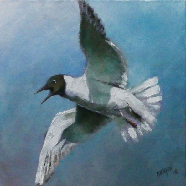 Alain Briant - The blackhead gull