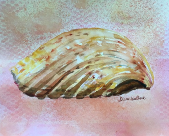 Diane Wallace - Cockle Shell Side View