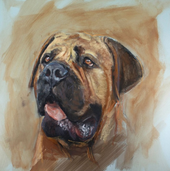 Matt Foy - Dogue De Bordeaux Study