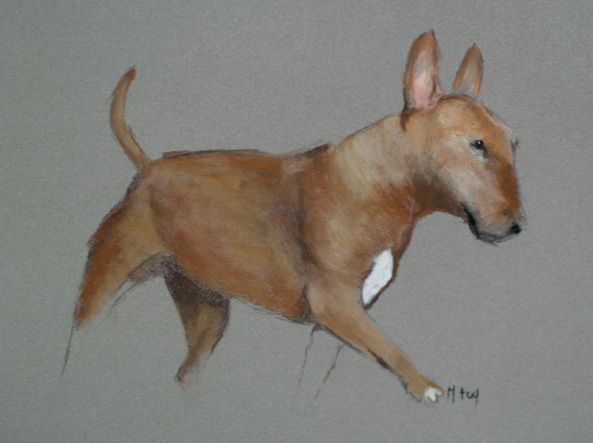 Matt Foy - English Bull Terrier Sketch in Pastel