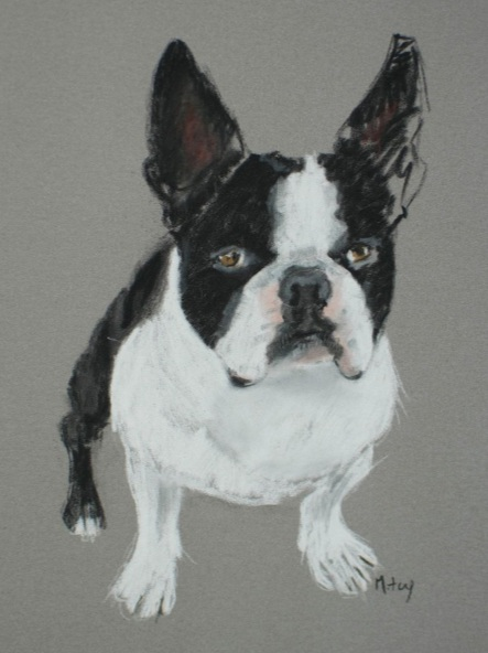 Matt Foy - French Bulldog Sketch