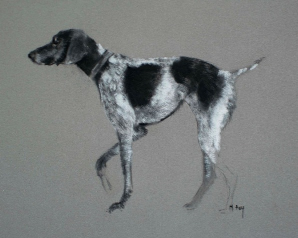 Matt Foy - Pointer Sketch in Charcoal