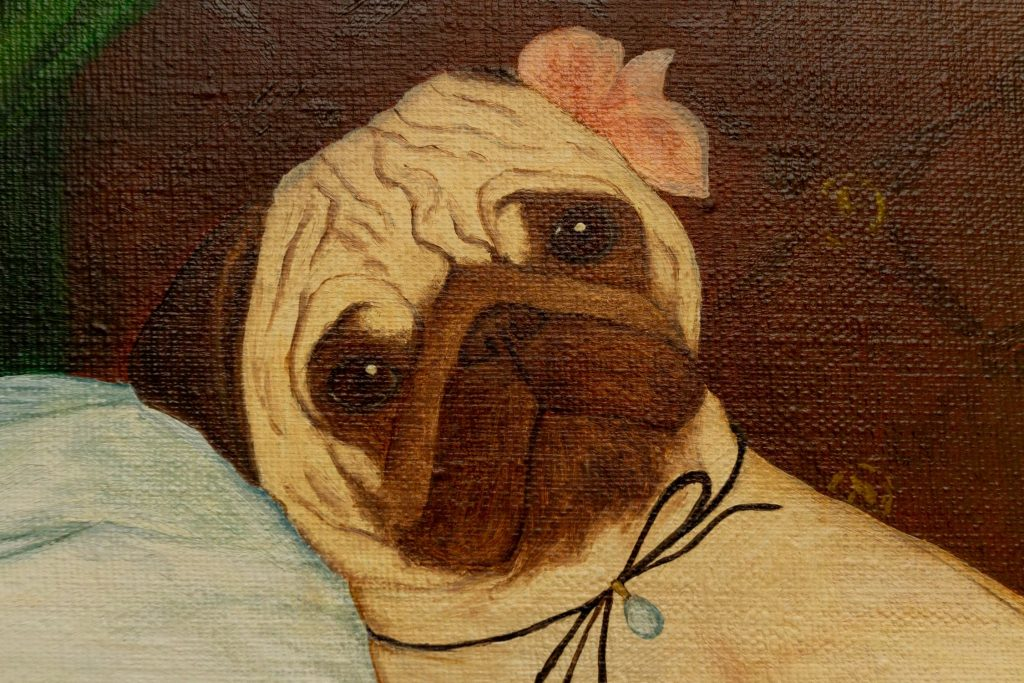 Yuliia Ustymenko - Puglympia. Great pugs. Close-up detail